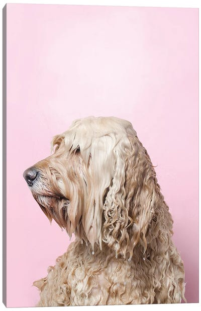 Wet Dog, Lelu Can'T See Canvas Art Print