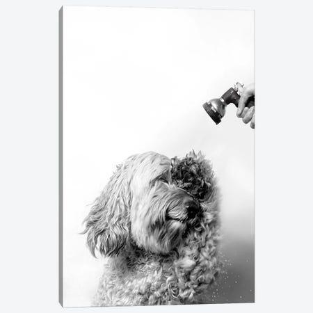 Wet Dog, Lelu, Black & White Canvas Print #SGM120} by Sophie Gamand Canvas Wall Art
