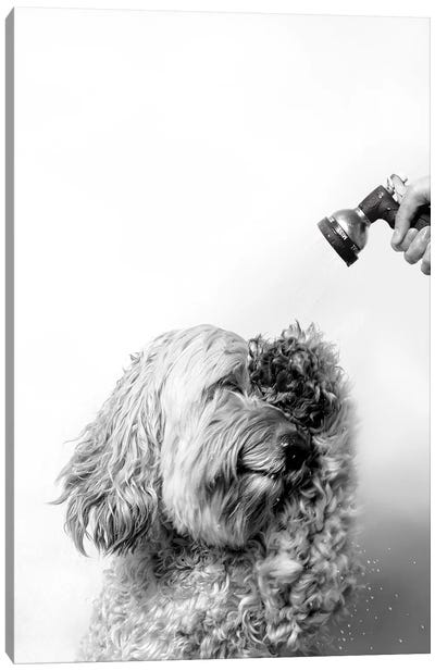 Wet Dog, Lelu, Black & White Canvas Art Print