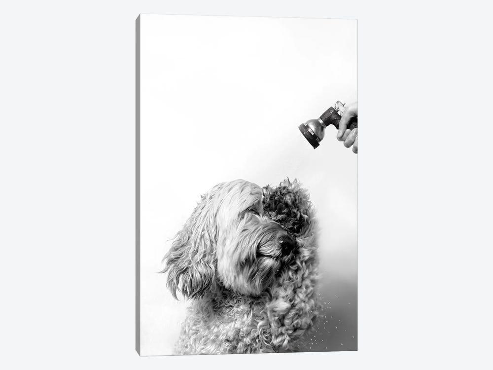 Wet Dog, Lelu, Black & White by Sophie Gamand 1-piece Canvas Artwork