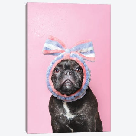 Wet Dog, Lulu Canvas Print #SGM121} by Sophie Gamand Canvas Art