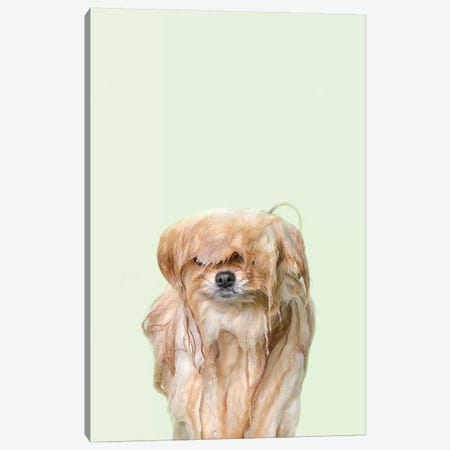 Wet Dog, Pancake Canvas Print #SGM122} by Sophie Gamand Canvas Art