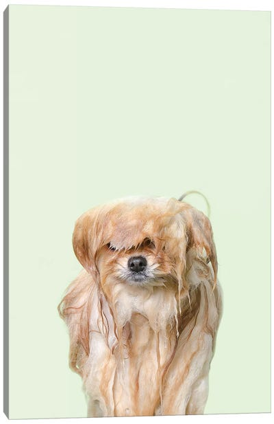 Wet Dog, Pancake Canvas Art Print