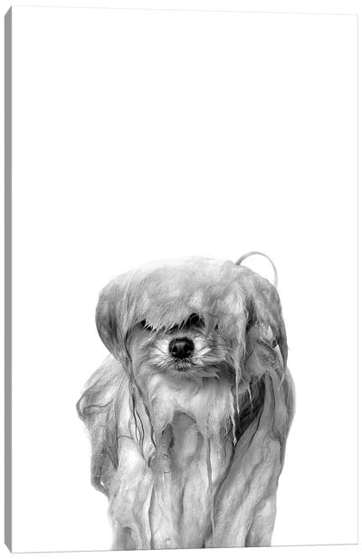 Wet Dog, Pancake, Black & White Canvas Art Print