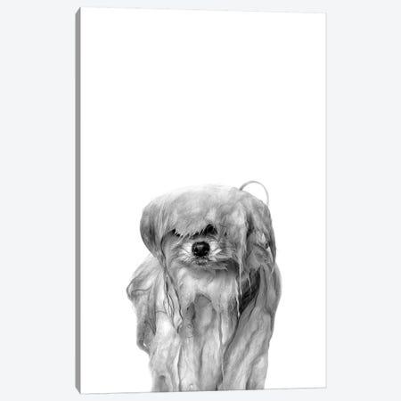 Wet Dog, Pancake, Black & White Canvas Print #SGM123} by Sophie Gamand Canvas Art