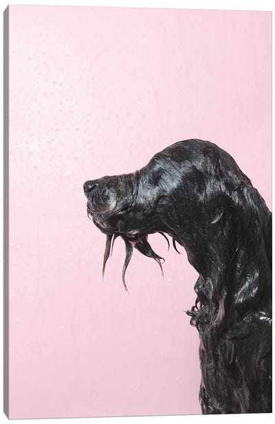 Wet Dog, Rerun Canvas Art Print