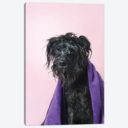 Wet Dog, Rerun With Towel Canvas Print #SGM125} by Sophie Gamand Canvas Art Print