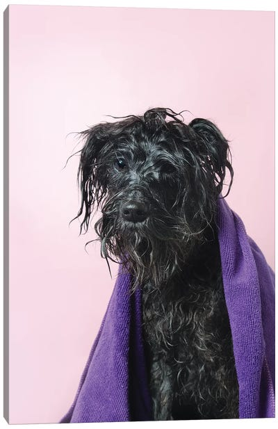 Wet Dog, Rerun With Towel Canvas Art Print