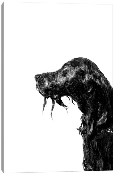 Wet Dog, Rerun, Black & White Canvas Art Print