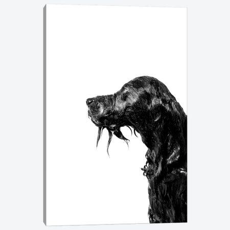 Wet Dog, Rerun, Black & White Canvas Print #SGM126} by Sophie Gamand Art Print