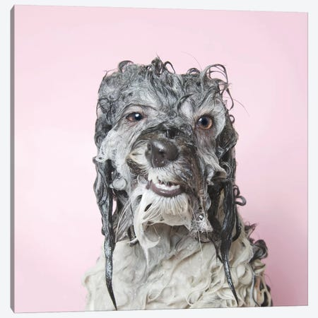 Wet Dog, Wanda Canvas Print #SGM127} by Sophie Gamand Art Print