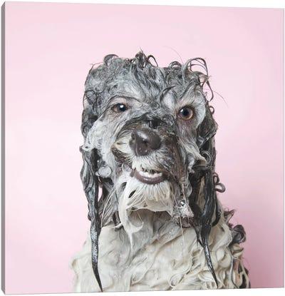 Wet Dog, Wanda Canvas Art Print