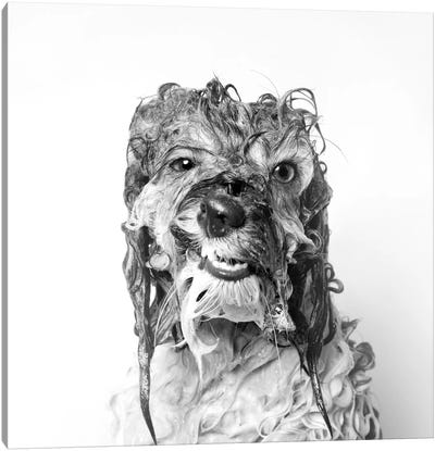 Wet Dog, Wanda, Black & White Canvas Art Print