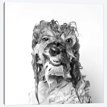 Wet Dog, Wanda, Black & White Canvas Print #SGM128} by Sophie Gamand Canvas Art
