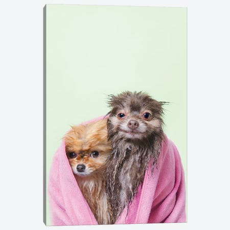 Wet Dogs, Chelsea And Pancake Canvas Print #SGM129} by Sophie Gamand Canvas Wall Art