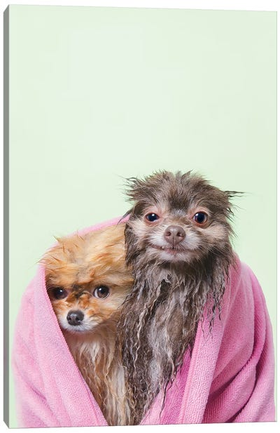 Wet Dogs, Chelsea And Pancake Canvas Art Print