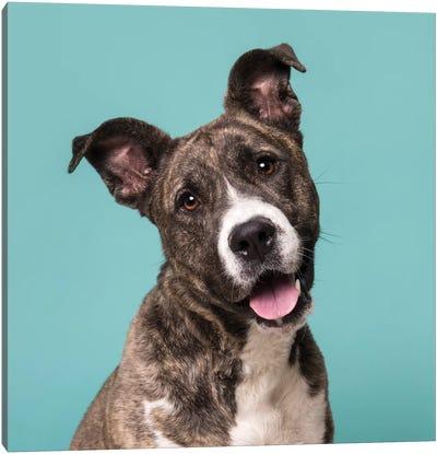Bella The Rescue Dog Canvas Art Print