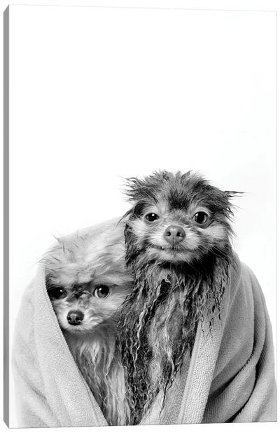 Wet Dogs, Chelsea And Pancake, Black & White Canvas Art Print