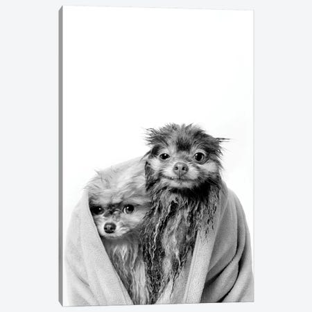 Wet Dogs, Chelsea And Pancake, Black & White Canvas Print #SGM130} by Sophie Gamand Canvas Art Print