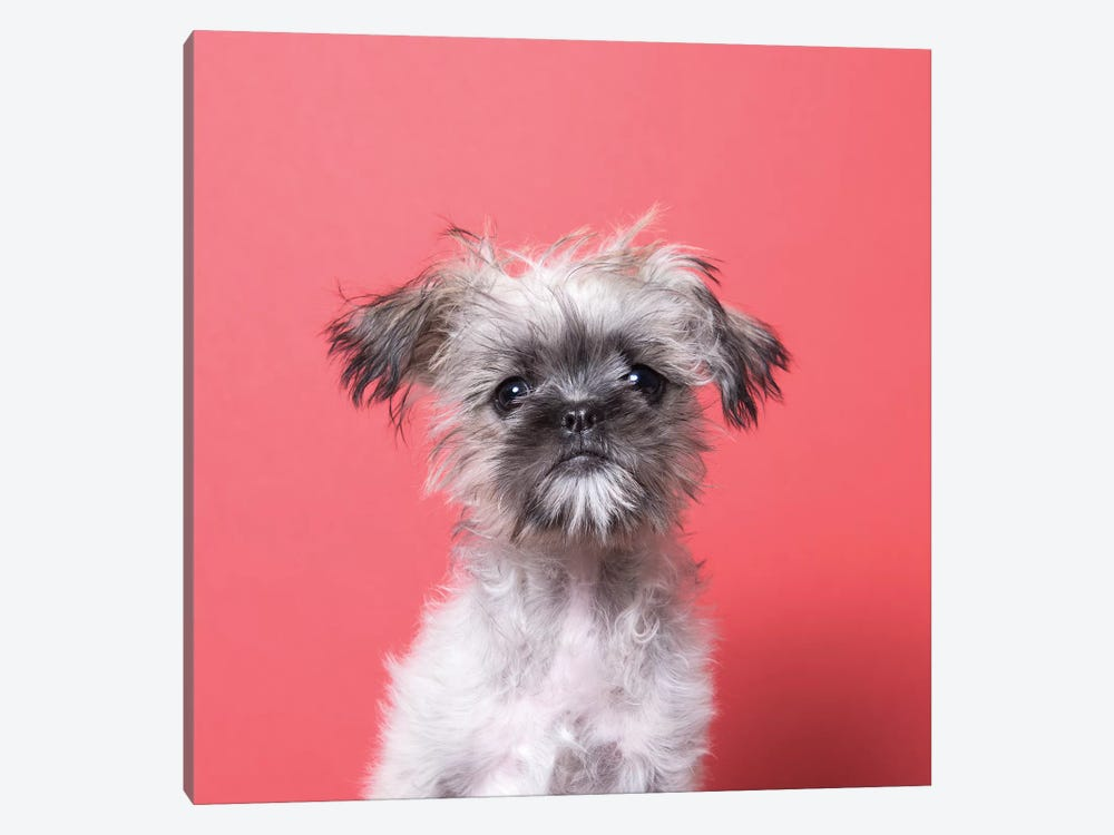 Wilma The Rescue Puppy by Sophie Gamand 1-piece Canvas Art