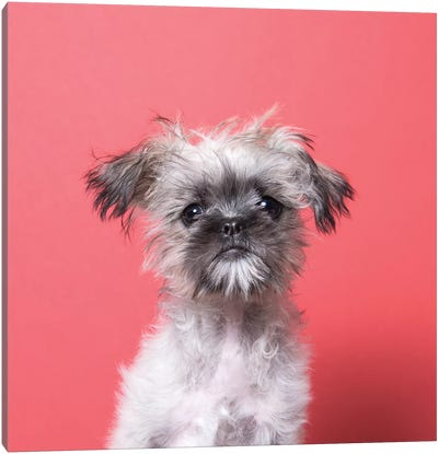 Wilma The Rescue Puppy Canvas Art Print