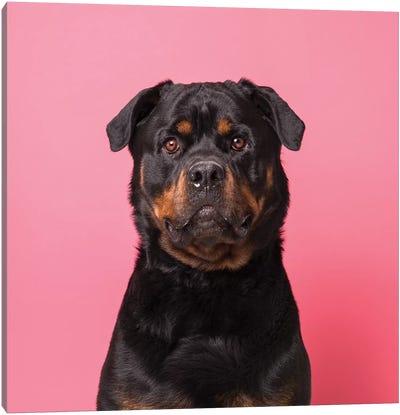 Bo The Rescue Dog, Serious Canvas Art Print