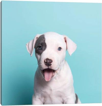 Ahoy The Rescue Puppy Canvas Art Print