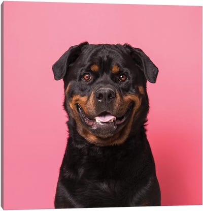 Bo The Rescue Dog, Smiling Canvas Art Print