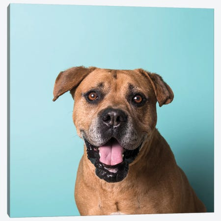 Booger The Rescue Dog Canvas Print #SGM21} by Sophie Gamand Canvas Print