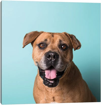 Booger The Rescue Dog Canvas Art Print