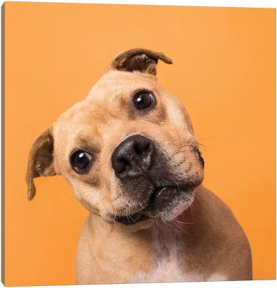 Bubba The Rescue Dog Canvas Art Print