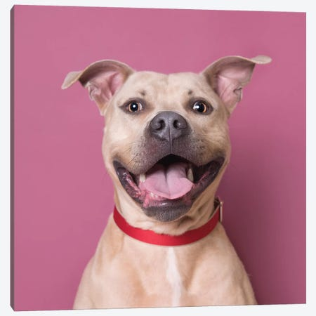 Bullet The Rescue Dog, Laughing Canvas Print #SGM26} by Sophie Gamand Canvas Artwork
