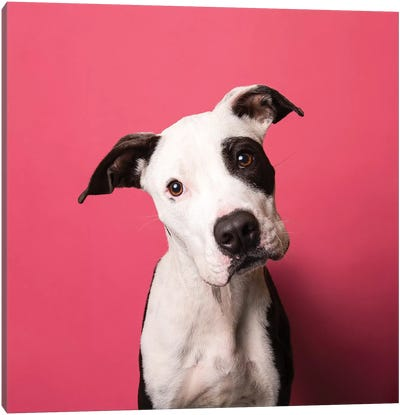 Bullet The Rescue Puppy Canvas Art Print