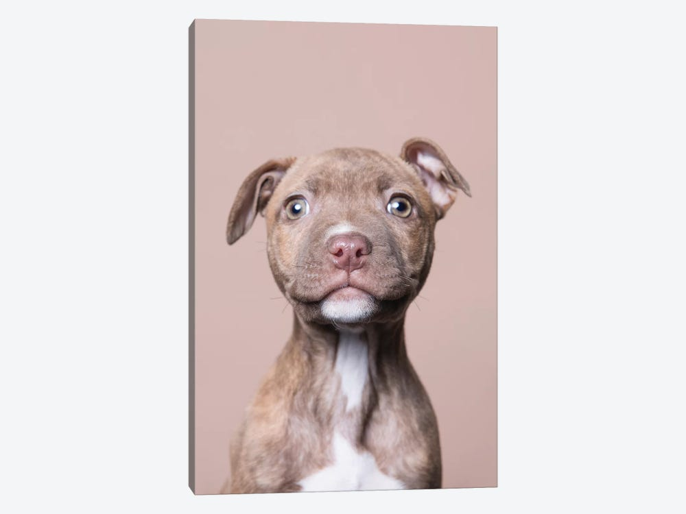 Akoni The Rescue Puppy by Sophie Gamand 1-piece Canvas Print