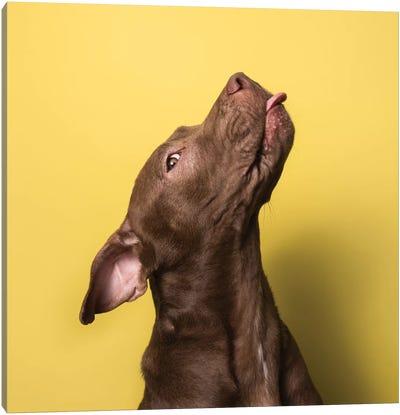 Champ The Rescue Dog Canvas Art Print
