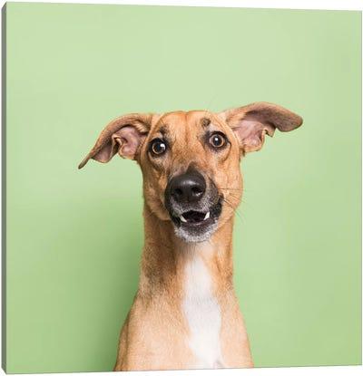 Cora The Rescue Dog III Canvas Art Print