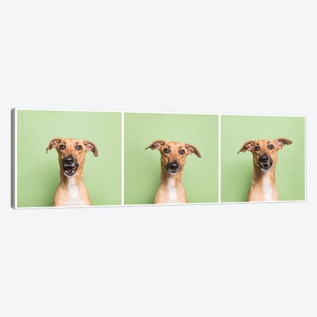 Cora The Rescue Dog Canvas Print #SGM39} by Sophie Gamand Canvas Artwork