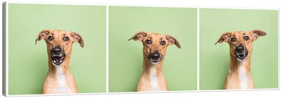 Cora The Rescue Dog Canvas Art Print