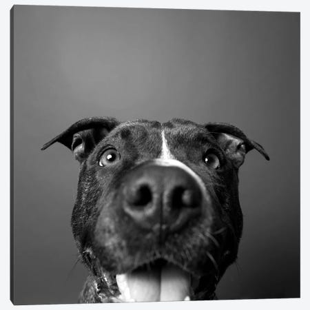 Angel The Rescue Dog, Black & White Canvas Print #SGM3} by Sophie Gamand Canvas Wall Art