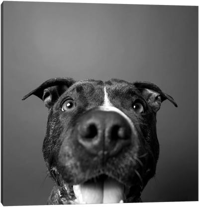 Angel The Rescue Dog, Black & White Canvas Art Print