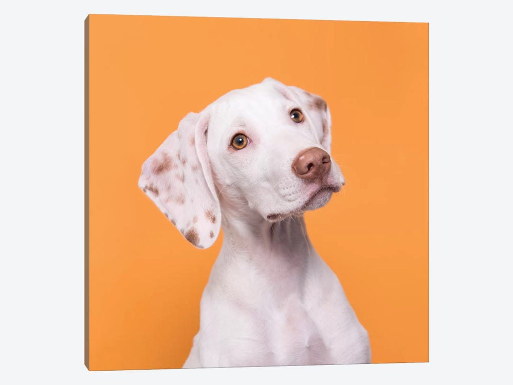 Doobert The Rescue Puppy by Sophie Gamand 1-piece Canvas Art