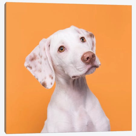 Doobert The Rescue Puppy 3-Piece Canvas #SGM43} by Sophie Gamand Canvas Print