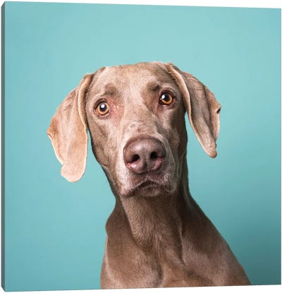 Harley The Rescue Dog Canvas Art Print