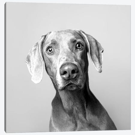 Harley The Rescue Dog, Black & White Canvas Print #SGM50} by Sophie Gamand Canvas Artwork