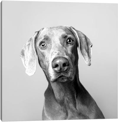 Harley The Rescue Dog, Black & White Canvas Art Print