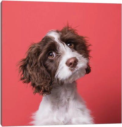 Harmon The Rescue Puppy Canvas Art Print