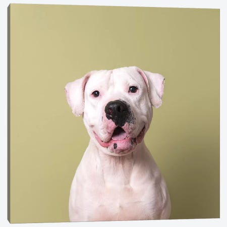 Hercules The Rescue Dog Canvas Print #SGM53} by Sophie Gamand Canvas Wall Art