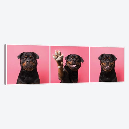 High Five! Bo The Rescue Dog Canvas Print #SGM54} by Sophie Gamand Canvas Art Print