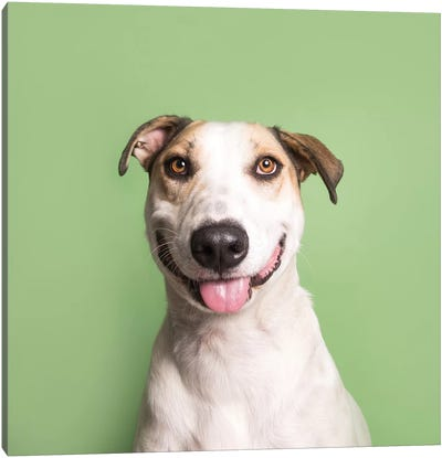 Kane The Rescue Dog Canvas Art Print