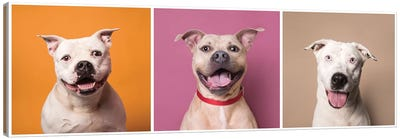 Laughing Rescue Dogs: Patton, Bullet And Ariel Canvas Art Print
